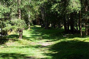 Mallnitz Seebachtal Naturlehrweg Waldpfad 01.jpg
