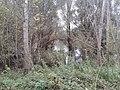 Maly dunaj - panoramio (1).jpg