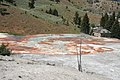 Mammoth Hot Springs 5.jpg