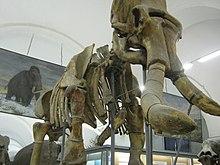 Skelett eines urmammuts im dritten saal