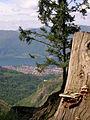 Mandello del Lario, vista da La Gardata.JPG