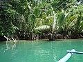 Mangroves (9165298966).jpg