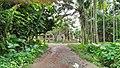 Manosapota Village Road Junction - Manasa Mound Area - Simurali - Nadia 20170730121921.jpg