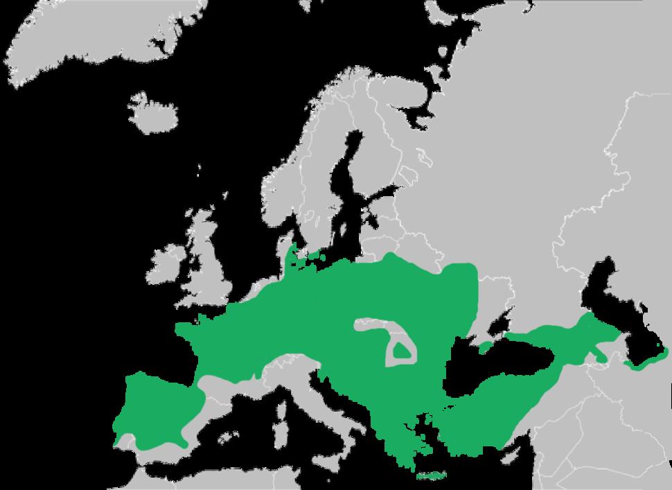 Mapa de distribución. As poboacións ibéricas representdas no mapa considérase actualmente que pertencen á especie H. molleri.