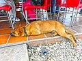 Marinilla Colombia - Street Dogs Perros Callejeros 08.jpg