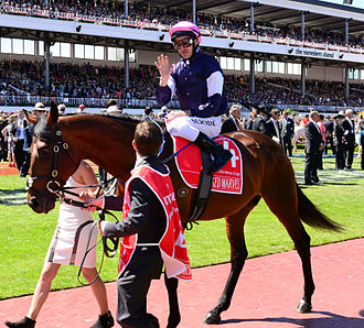 Michael Rodd (jockey) - Rodd prior to the 2013 Melbourne Cup, in which he rode Masked Marvel, placing eighteenth.