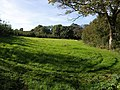 Meadow by Mussel Brook - geograph.org.uk - 577564.jpg