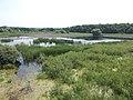 Merzse Marsh Nature Reserve, reeds, Rákoshegy, 2016 Hungary.jpg