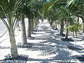 Miami Beach FL Holocaust Memorial04.jpg