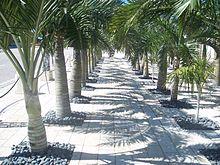 Rd Ave Marco Island Fl