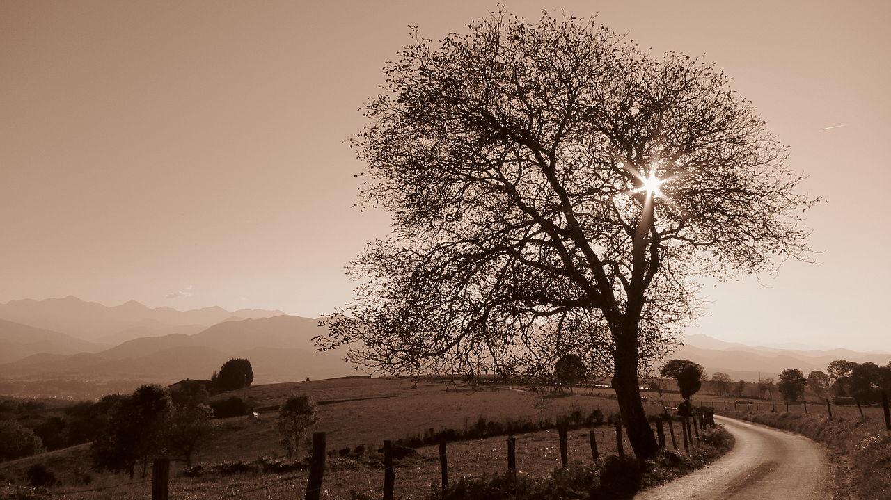 Nogal en Montjoie-en-Couserans, Ariège (Francia).