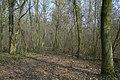 Motte op de Butsberg te Tielt-Winge - 372631 - onroerenderfgoed.jpg