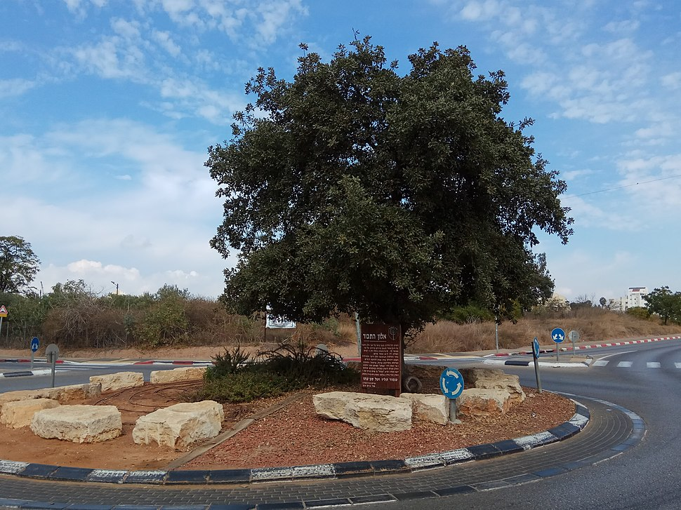 Mount Tabor oak circle in Hod Hasharon