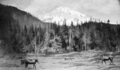 Mt Tacoma from Nixon book.png