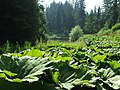 NP TARA - Biljni svet.jpg