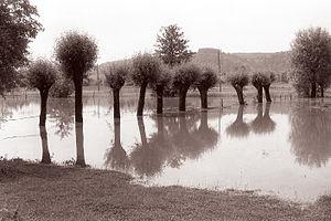 Pesnica (river)