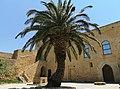Naro - castle - palm tree.jpg