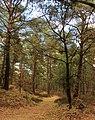Nationaal Park Drents-Friese Wold. Locatie Dieverzand 004.JPG