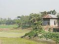 Natural beauty munshiganj village.jpg