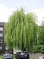 Naturdenkmal ND 024 in Mülheim an der Ruhr.jpg
