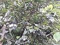 Nature20170724 163319(0).jpg