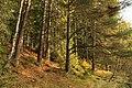 Nature reserve Dobrockovske hadce in autumn 2011 (26).JPG