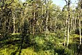 Nature reserve Rájecká rašeliniště in summer 2014 (4).JPG