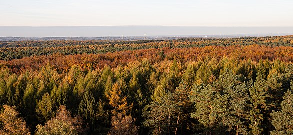 Naturpark Hohe Mark-Westmünsterland.jpg