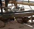 Negev Zoo Beersheva Israel IMG 0584a.JPG