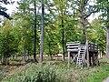 Neuweiler Viehweide (historisches Waldweidgebiet, auf 6 Hektar werden jüngere Bäume zurückgedrängt, die 350 Jahre alten Eichen sind wieder freigestellt) bei dem Museums Radweg, Würm.Rad.Weg - Heckengäu Natur Nah - panoramio (2).jpg