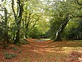 New Forest Path, James's Hill - geograph.org.uk - 1020019.jpg