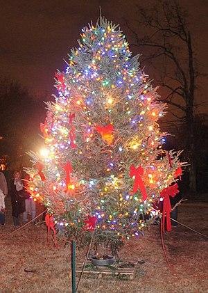 New Highland Park - Christmas Tree at New Highland Park, December 2010