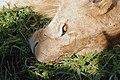 Ngorongoro 2012 05 30 2579 (7500985304).jpg
