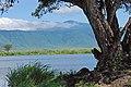 Ngorongoro 2012 05 30 2635 (7500974320).jpg
