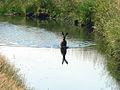 Northwest Wildlife 04 (6872906345).jpg