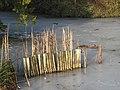 Nowton Park, Nowton near Bury St Edmunds - geograph.org.uk - 1710534.jpg