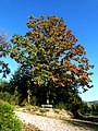 Oak In Autumn - panoramio.jpg