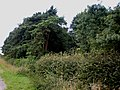 Old Dale Plantation - geograph.org.uk - 1436560.jpg