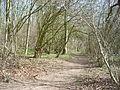 Old Down Wood 01.JPG