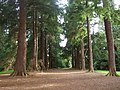 Old Pinetum, Scone Palace grounds. - geograph.org.uk - 1004040.jpg