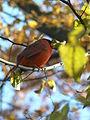 Orange Bird.JPG