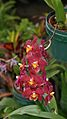 OrchidAt TheMendel.jpg