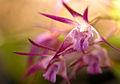 Orchids (3836736294).jpg