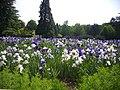 Orléans - parc floral (132).jpg