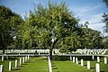 Osage Orange in Arlington National Cemetery (29984328420).jpg