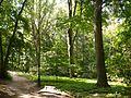 Ostromecko-zabytkowy park w stylu angielskim.JPG