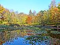 Ostromecko park 20 10-2013.jpg
