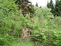 Overgrown gateway - geograph.org.uk - 207881.jpg