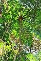 Palmeira Trilha Gravatá.jpg