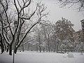 Parco Solari Trees Snow1.jpg